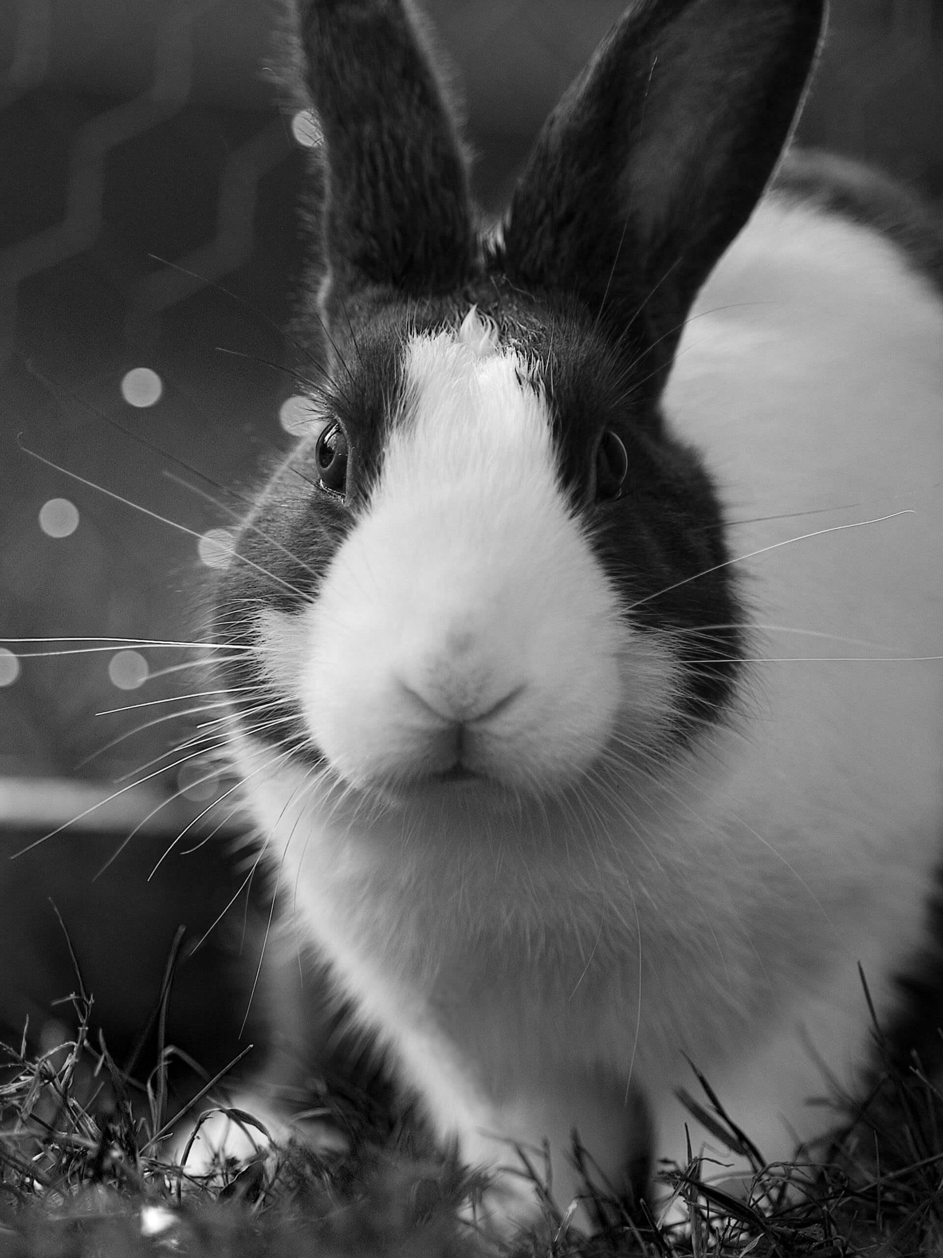 clinicaveterinariasampron.es - conejo