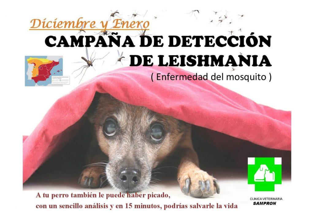clinicaveterinariasampron.es - campaña de detección de leishmania